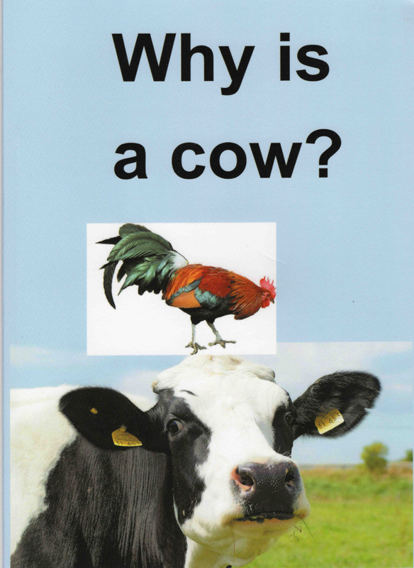 Why Is A Cow?